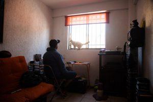 Serie Catlovers